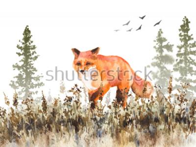 Fototapet Akvarellmålning. Hand Rid animalistisk illustration. Röd räv som går på fading äng. Höst scen med vild rovdjur rörelse, granar i dimma och torkat gräs.
