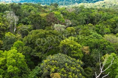 Fototapet Amazonas i Brasilien