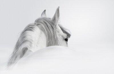 Fototapet Andalusian häst i en dimma