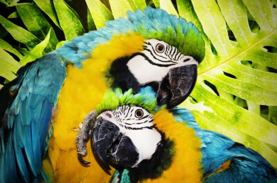 Fototapet ara papegoja