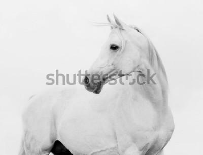 Fototapet arab horse in high key