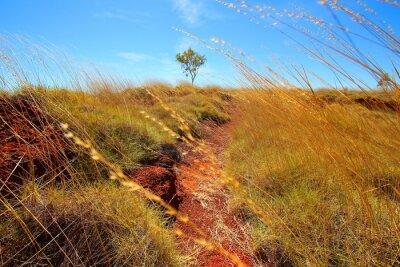 Fototapet australiensiska vildmarken