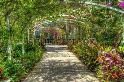 Fototapet Bågen täckt med ljusa färgglada blommor på den botaniska trädgården i Neapel FL