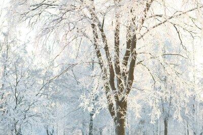 Fototapet Bakgrunds träd med frostade trädgrenar på en vinterdag