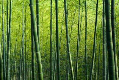 Fototapet Bamboo Forest