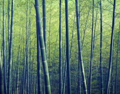 Fototapet Bamboo Forest träd Natur Concepts