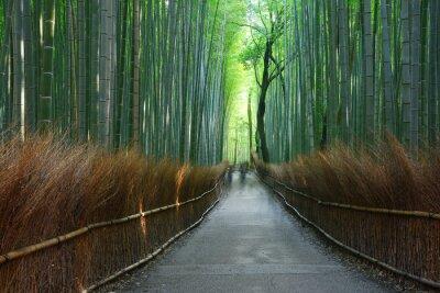 Fototapet bambu