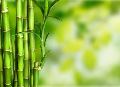 Fototapet Bambu.