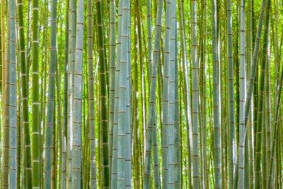 Fototapet bambu bakgrund i naturen på dagen