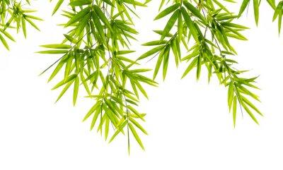 Fototapet bambu blad isolerad på vit bakgrund