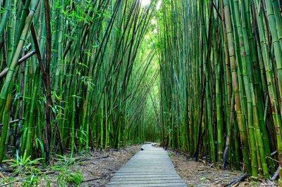 Fototapet bambu forrest