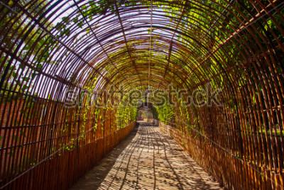 Fototapet Bambu kurvträ tunnel i en park
