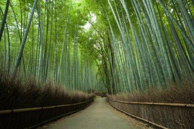 Fototapet Bambu skogsväg, Kyoto, Japan
