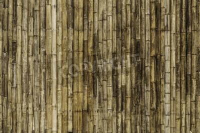 Fototapet Bambu staket bakgrund