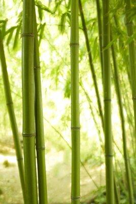 Fototapet Bambu stjälkar 2