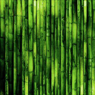 Fototapet bambu vägg