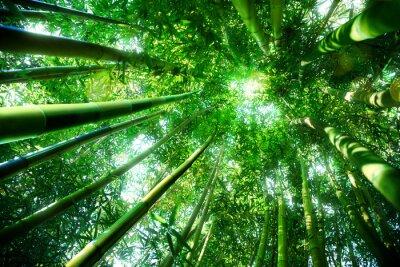 Fototapet bambuskog - zen koncept
