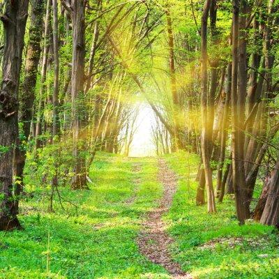 Fototapet Bana i vacker grön park