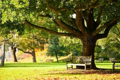 Fototapet Bänk under trädet i Royal Botanic Gardens i London