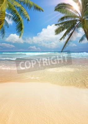 Fototapet Beach palm