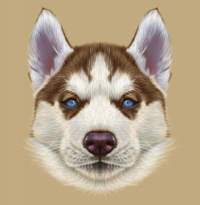 Fototapet Belysande Porträtt av Husky valp. Söt Porträtt av ung koppar röd tvåfärgad hund med ljusblå ögon.
