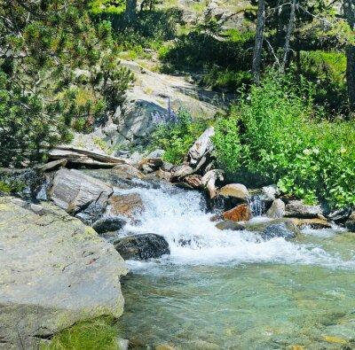 Fototapet berg flod och barrskog