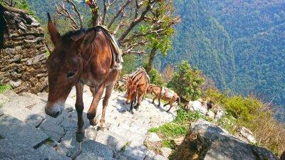 Fototapet bergs åsnor i Nepal