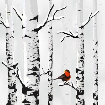 Fototapet Björk i snö, vinter kort i vektorn