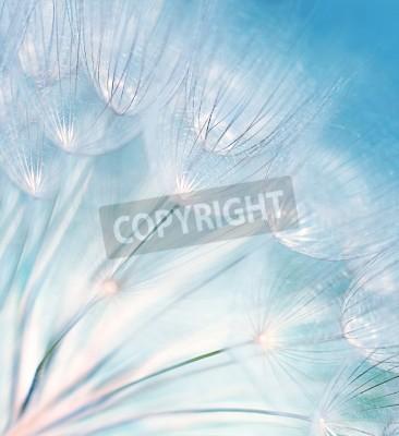 Fototapet Blå abstrakt maskros blomma bakgrund, extrem närbild med mjuk fokusering, vackra natur detaljer