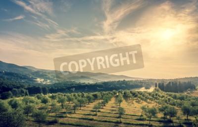 Fototapet Blå himmel över olivolja fält i Toscana