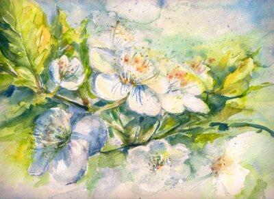 Fototapet Blommande gren av akvarell körsbärsträdet målade