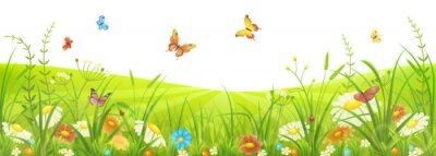 Fototapet Blommor sommaren eller våren äng med grönt gräs, blommor och fjärilar