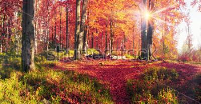 Fototapet Bokskogar i reservkottsklostret Bubnyshche - en legendary plats nära fantastiska stenblock mitt i vackra naturskogar, populär bland turister och resenärer i Östeuropa och Ukraina