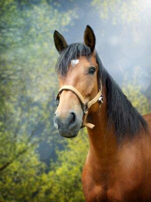 Fototapet Brun häst på våren landskap