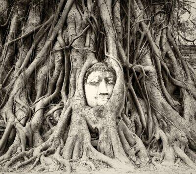Fototapet Buddha huvud i trädrötter i Wat Mahathat, Ayutthaya, Thailand
