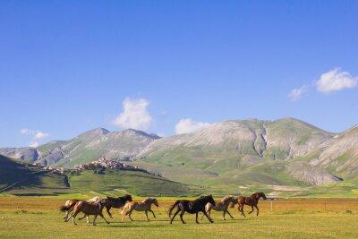 Fototapet Cavalli al galoppo nei pressi di Castelluccio