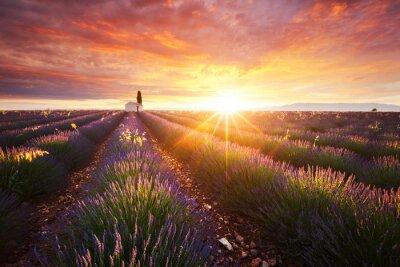 Fototapet Champ de lavande en Provence, Frankrike