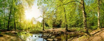 Fototapet Clearing i skogen med ström och solsken