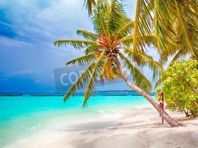 Fototapet Coconut palm beach