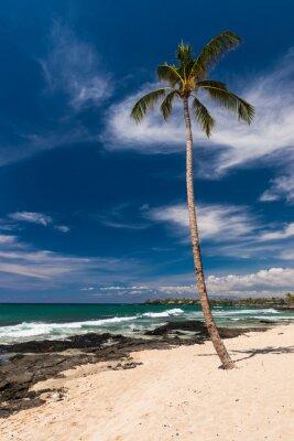 Fototapet Coconut Palm Tree på en Hawaiian Beach, Big Island