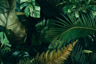 Fototapet Creative layout made of tropical leaves. Flat lay. Nature concept.