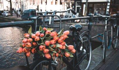Fototapet Cykel med tulpaner
