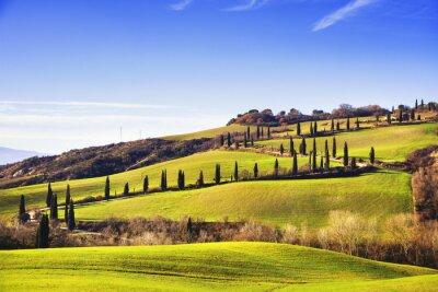 Fototapet Cypresser natursköna väg. Siena, Toscana, Italien.