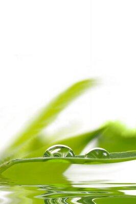 Fototapet Dagg droppar på bambu blad