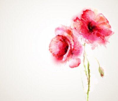 Fototapet De två blommande röd vallmo. Gratulationskort.