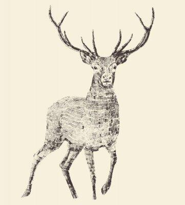 Fototapet Deer gravyr, Vintage Illustration, Vector