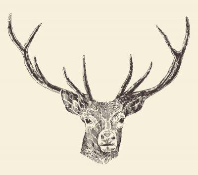 Fototapet Deer Head Vintage Illustration Hand Drawn, Vector
