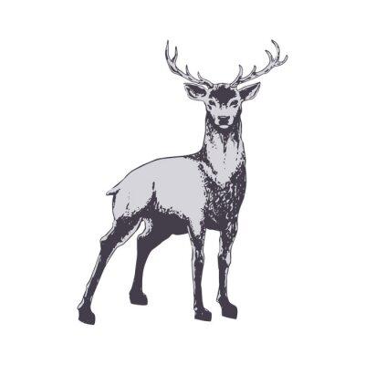 Fototapet Deer isolerat på vit