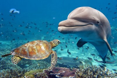 Fototapet delfin och sköldpadda undervattens- på revet