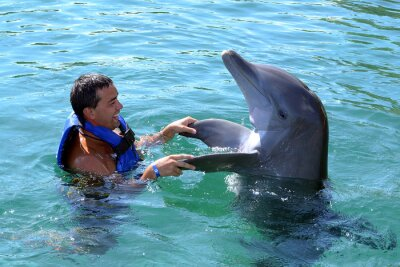 Fototapet delfin simma med man